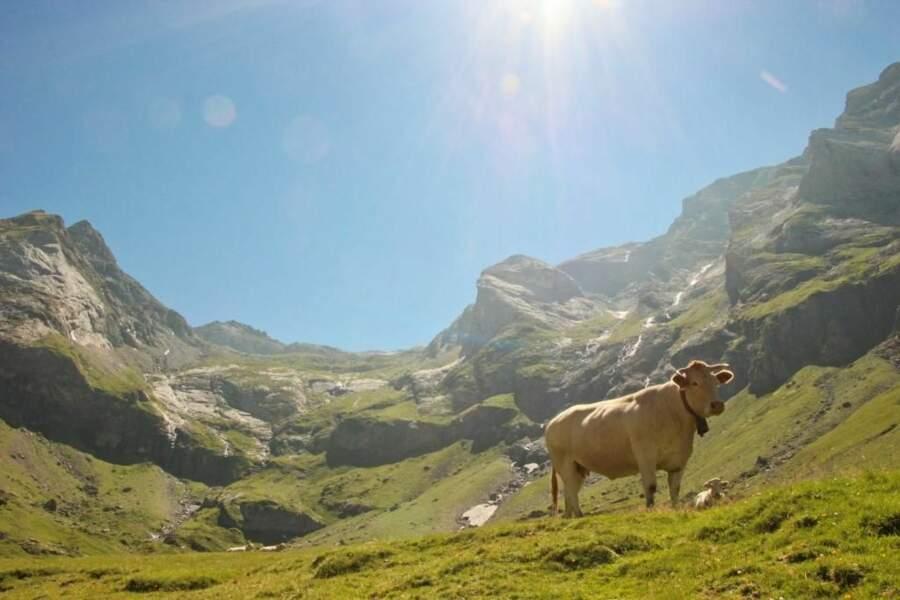 Photo prise dans les Pyrénées par lilouphotography