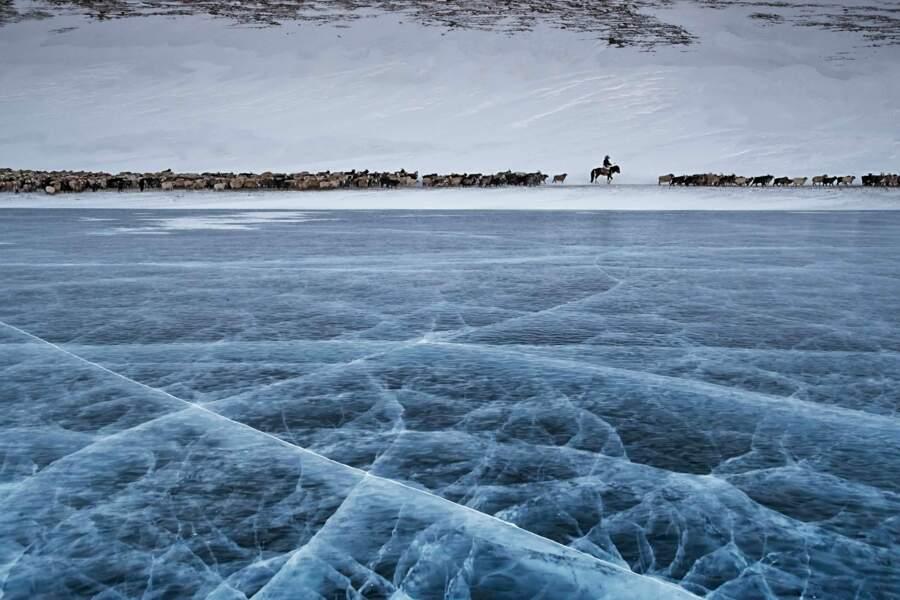 Transhumance d'hiver
