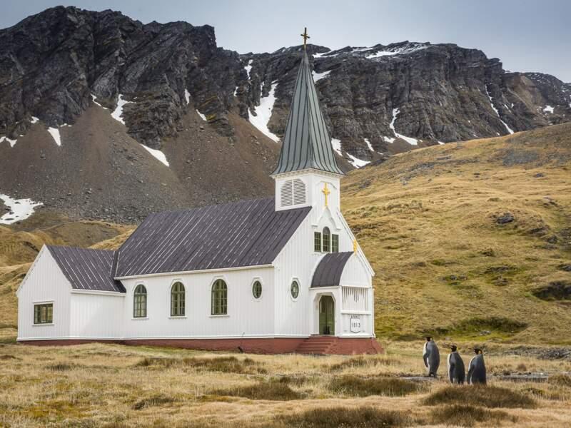 Procession de manchots royaux (Grytviken, Géorgie du Sud)