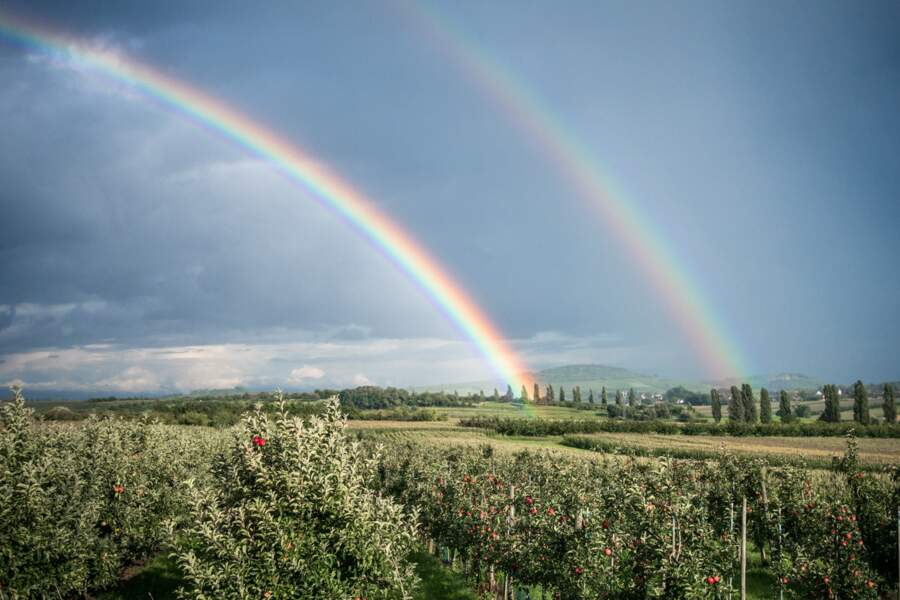 Double arc-en-ciel sur le vignoble et les vergers de Traenheim