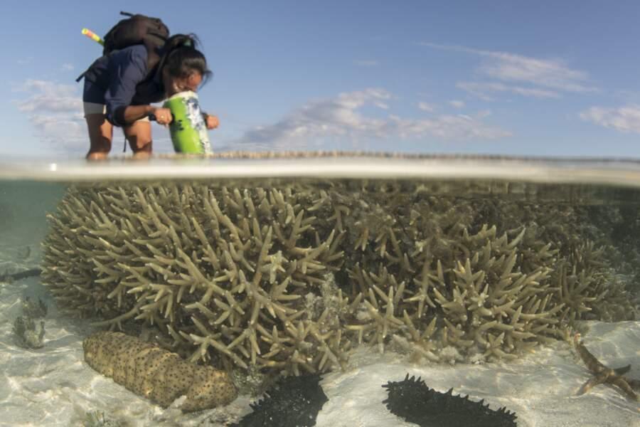 Coraux affleurant à Heron Island