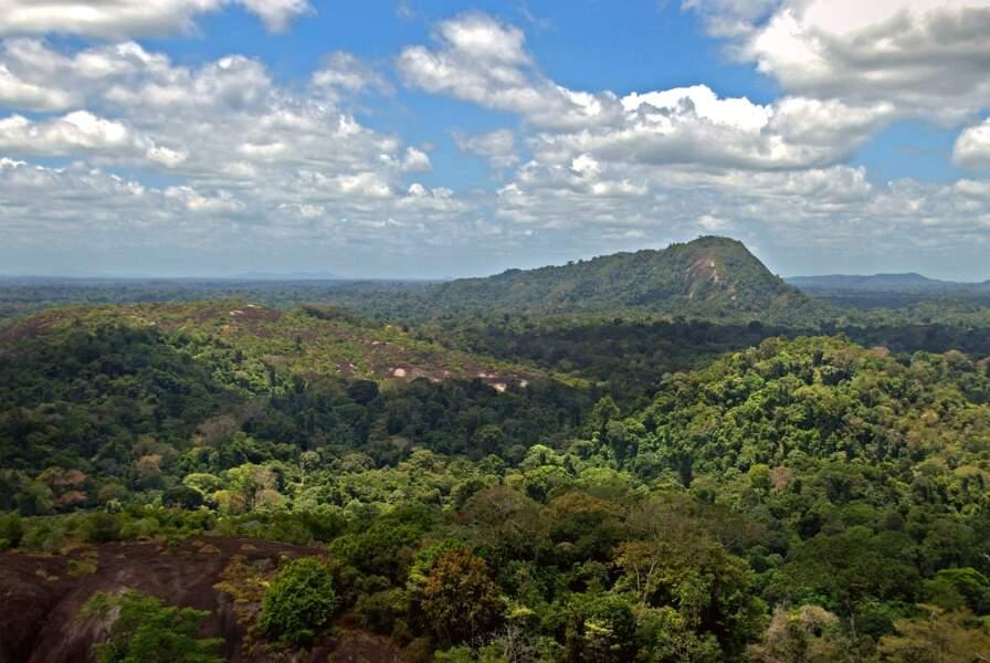 Une nouvelle partie de la forêt amazonienne maintenant protégée