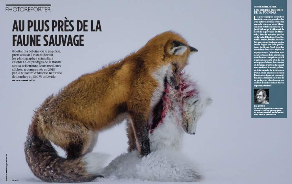 PHOTOREPORTER : Au plus près de la faune sauvage