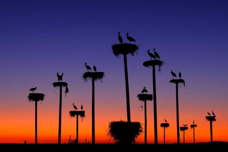 Poteaux artificiels de nidification