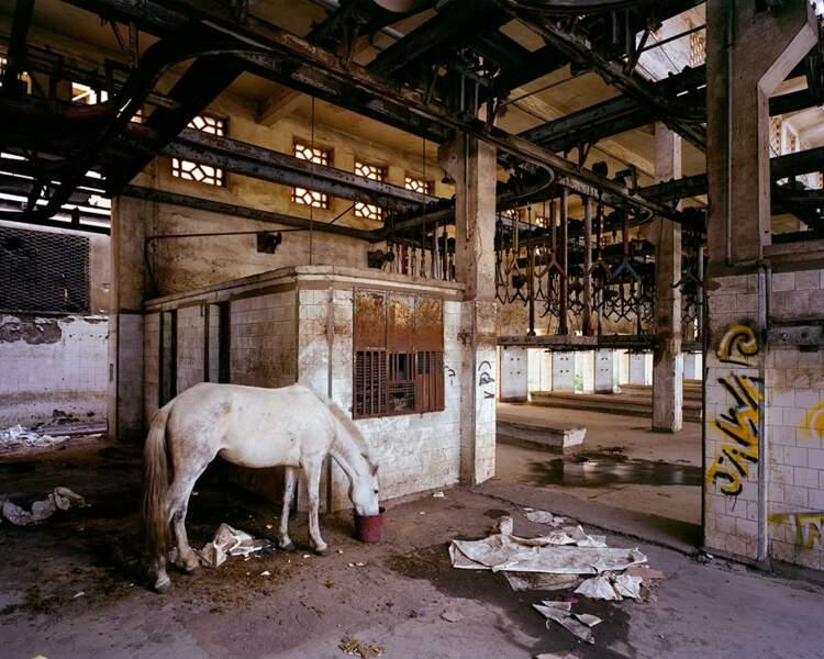 Abattoir, Casablanca, 1922, Maroc