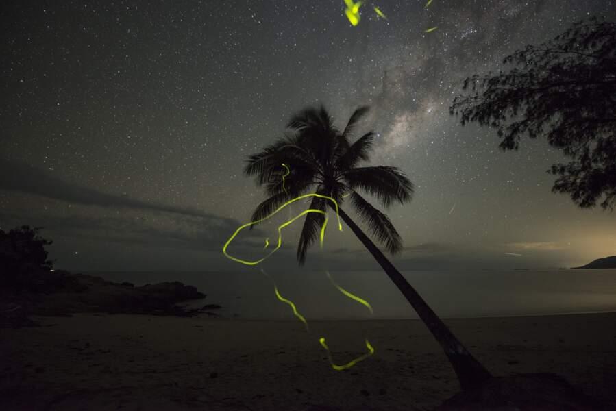 Lucioles et nuit étoilée à Oak Beach