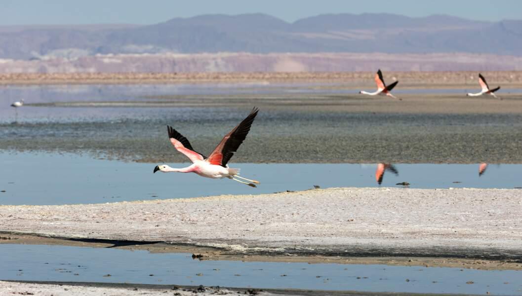 Désert aride d'Atacama au Chili