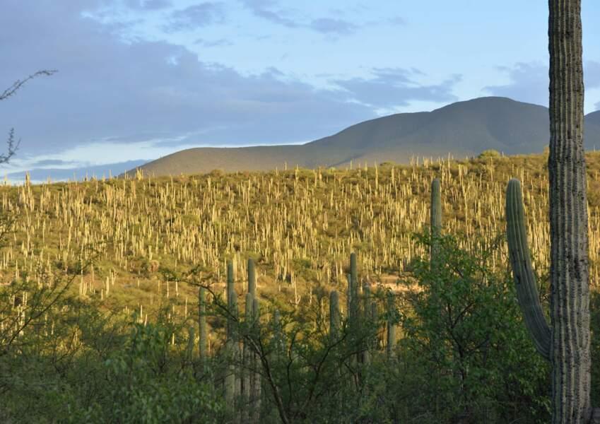 La vallée de Tehuacán-Cuicatlán : habitat originel de Méso-Amérique, Mexique