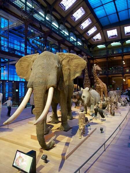 6. Le Museum national d'histoire naturelle