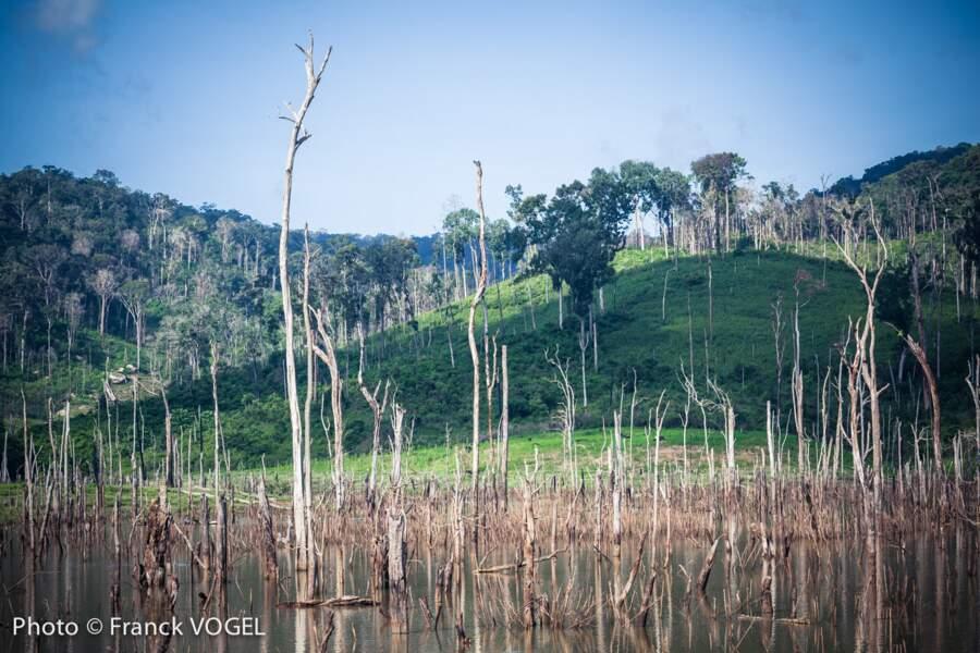 Du bois mort et une économie coulée