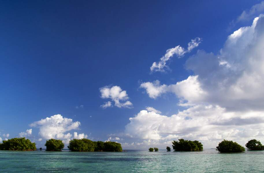 Des paysages tropicaux à couper le souffle