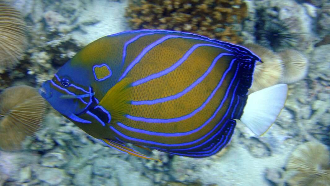 3e spot: la mer d'Andaman en Thaïlande