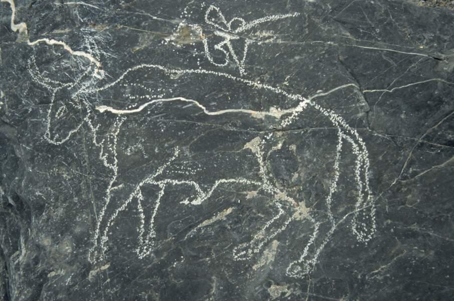 Admirer des pétroglyphes