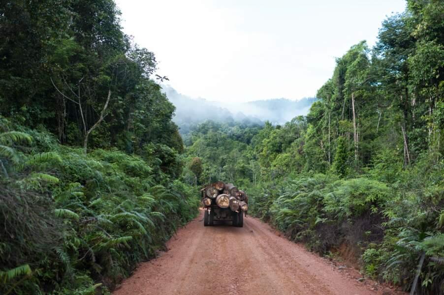 Saignée sauvage dans la jungle