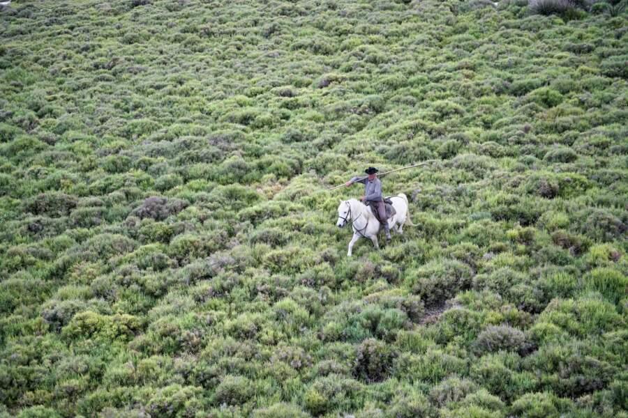 Les sansouïres, prés salés où ne poussent que salicornes, soudes et saladelles