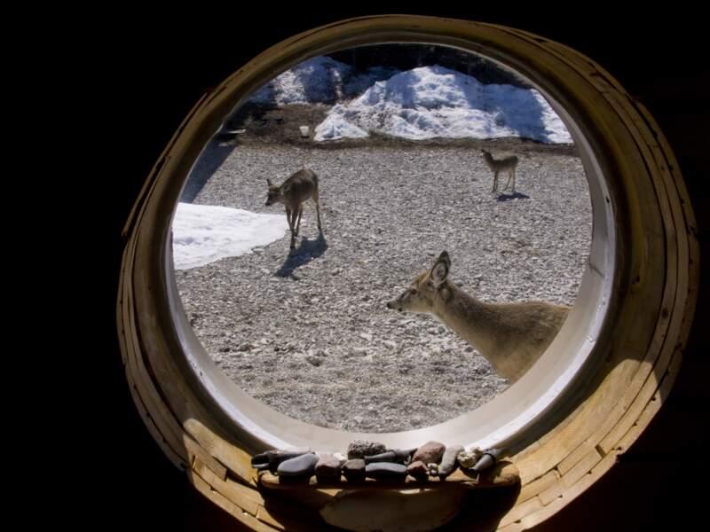 Ronde de cerfs