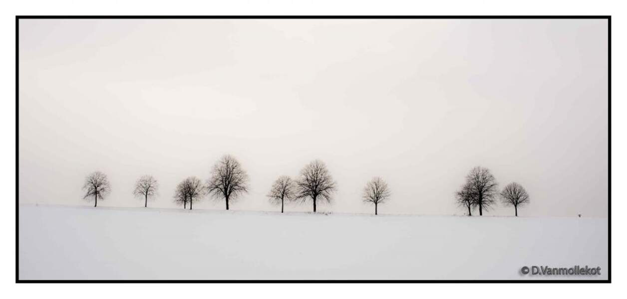 Photo prise par Didier Vanmollekot