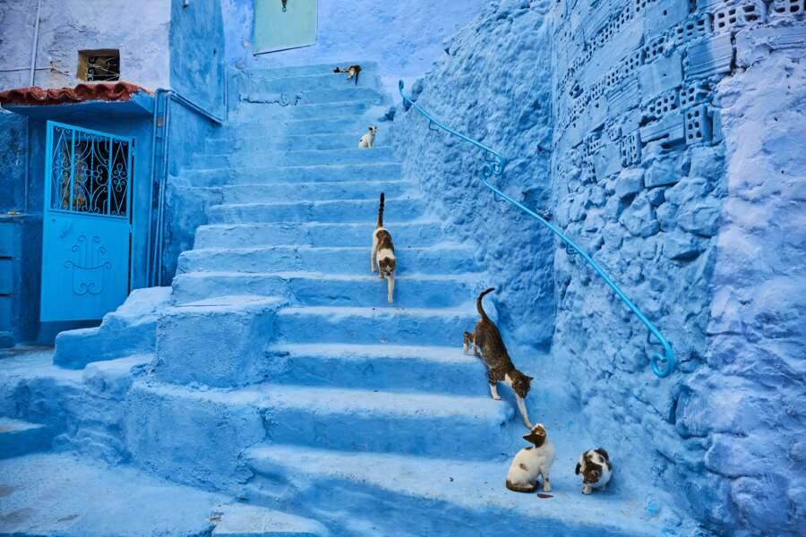 Les chats errants de Chefchaouen, au Maroc, peuvent compter sur la générosité des habitants