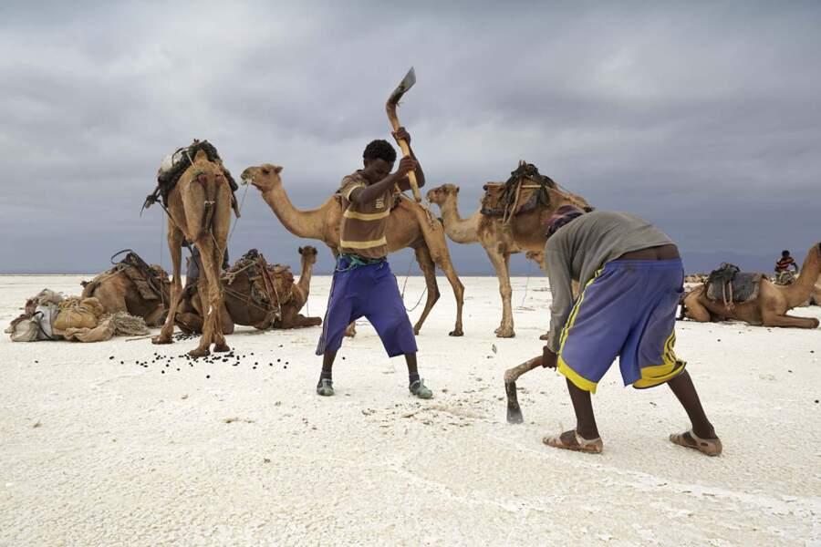 Le sel, seul richesse du Danakil