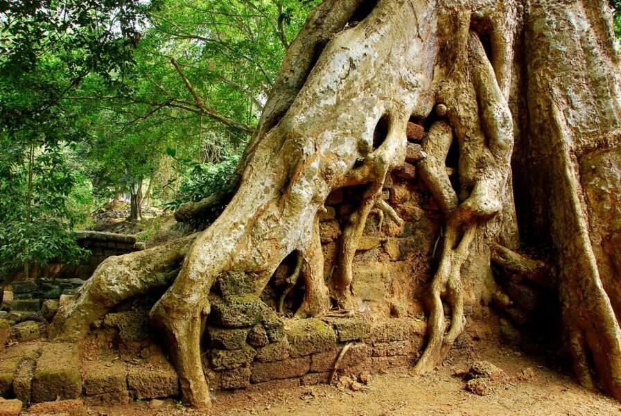 Classé au patrimoine mondial de l'Unesco, un aperçu du temple d'Angkor Vat au Cambodge