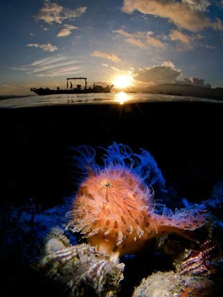 Chevelu face au lever de soleil