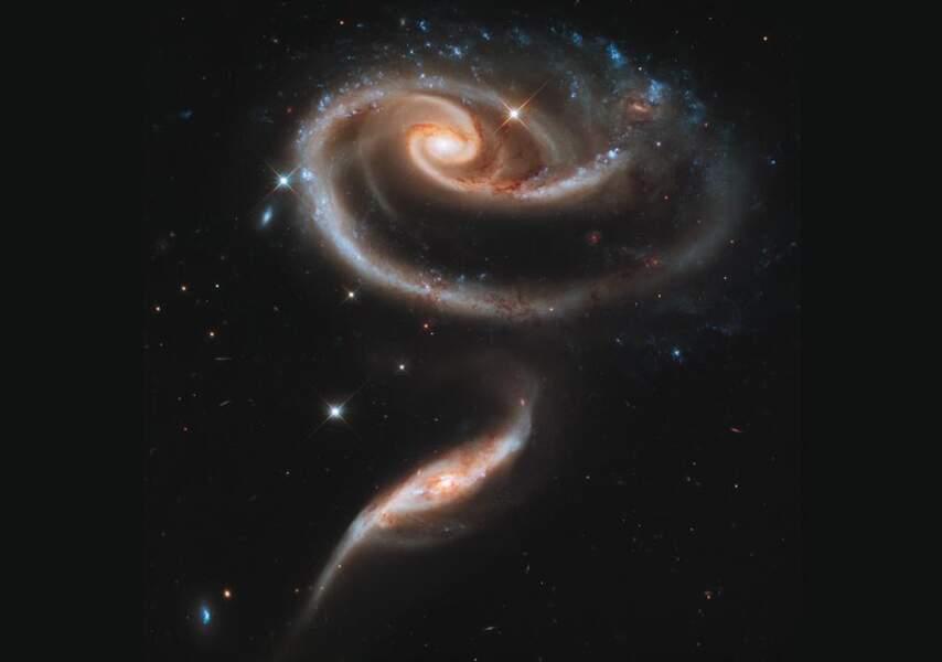 Rose galactique