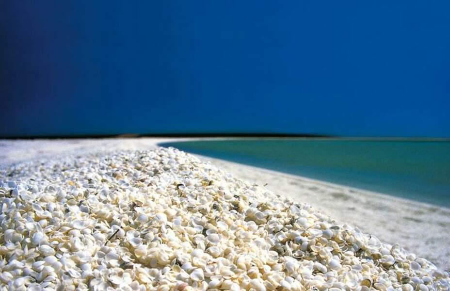 Shell Beach, en Australie