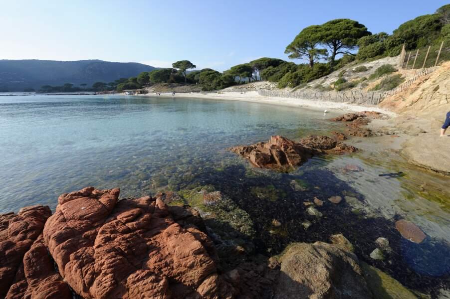 Bonus - la Plage de Palombaggia, Corse, élue plus belle plage française