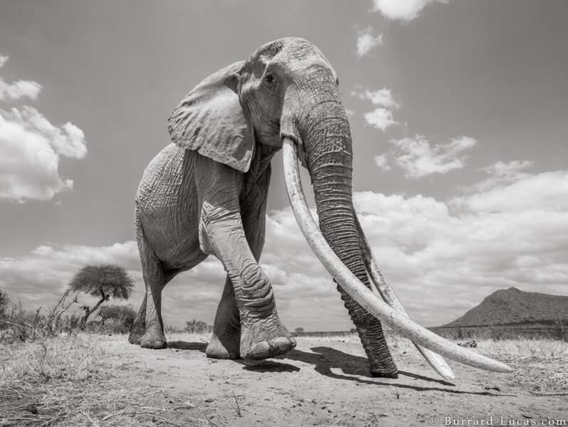 Une éléphante exceptionnelle