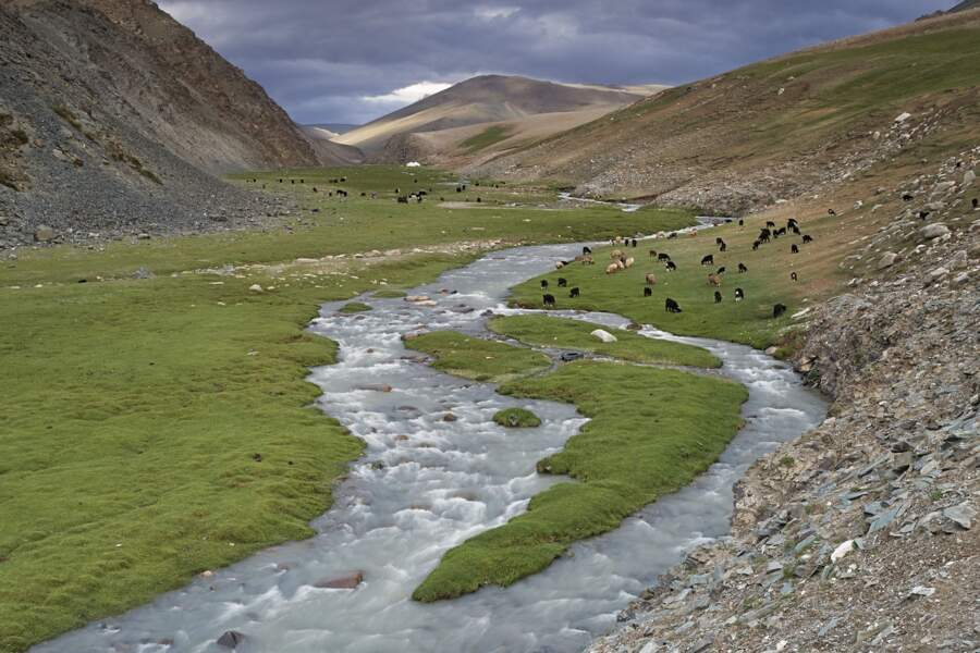 Discrète force vive de la steppe