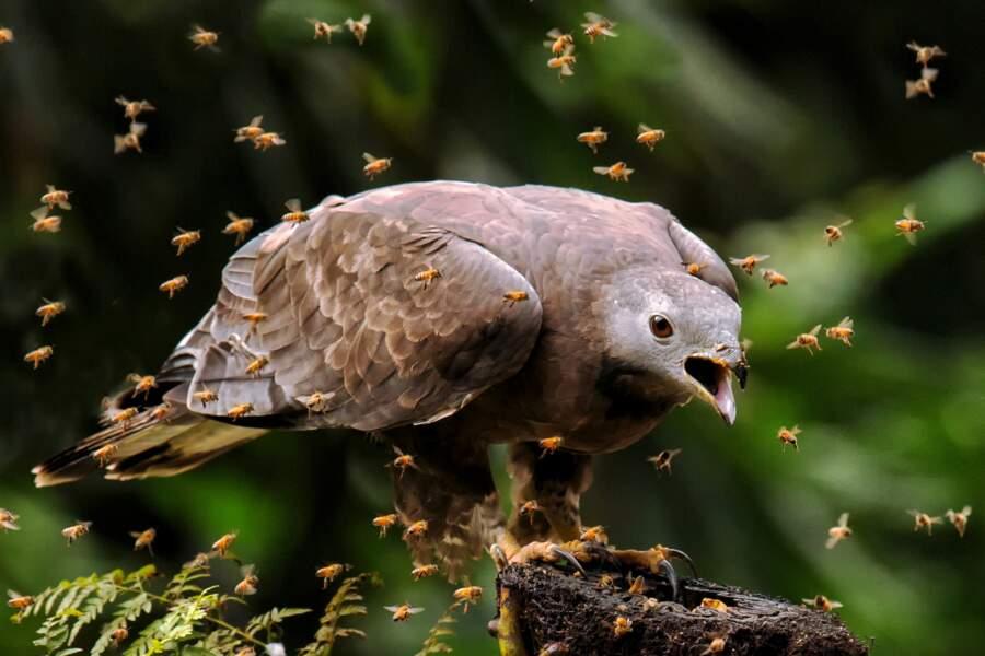 La tête dans les abeilles
