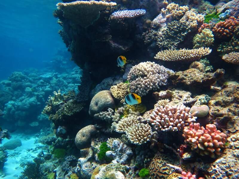 De nouveaux efforts dans la préservation des coraux
