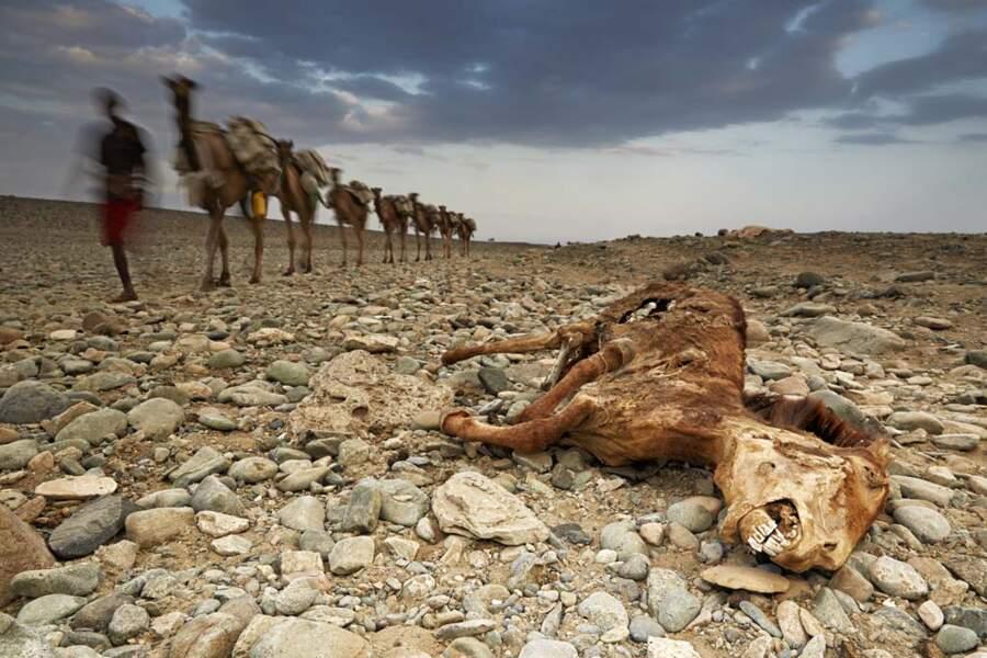 Dans le Danakil, la mort rôde partout