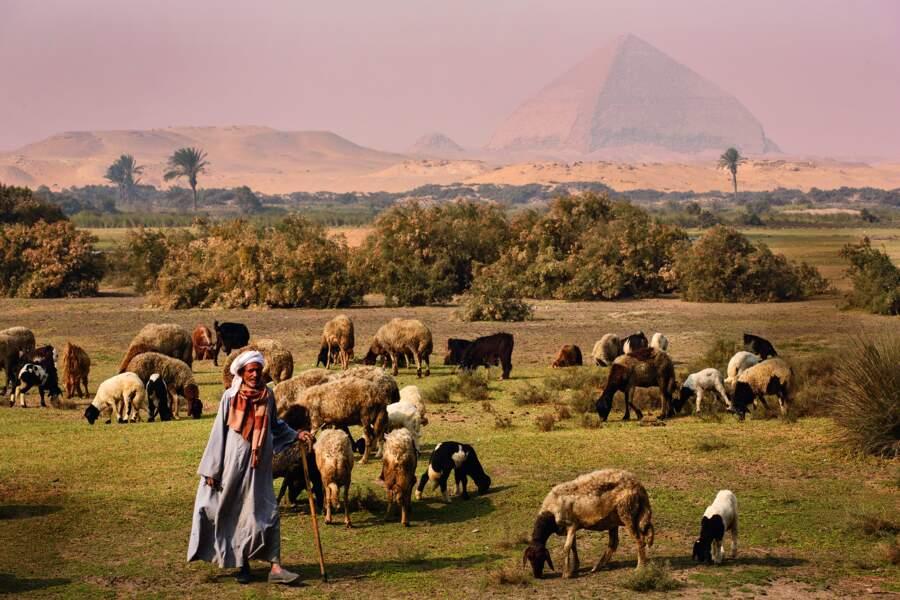Imposantes, les pyramides du roi Snéfrou surplombent Dachour
