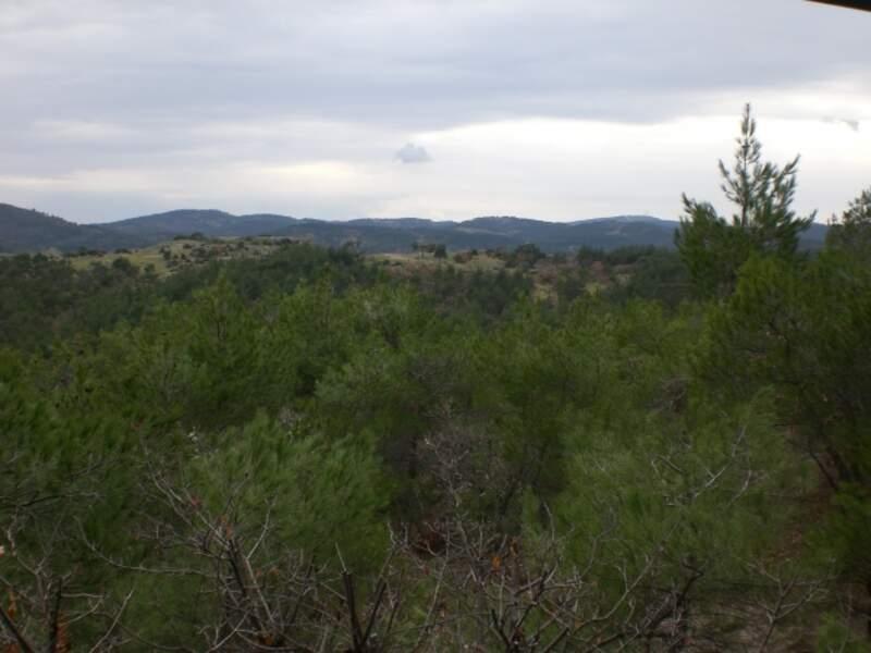 La forêt de Dadia