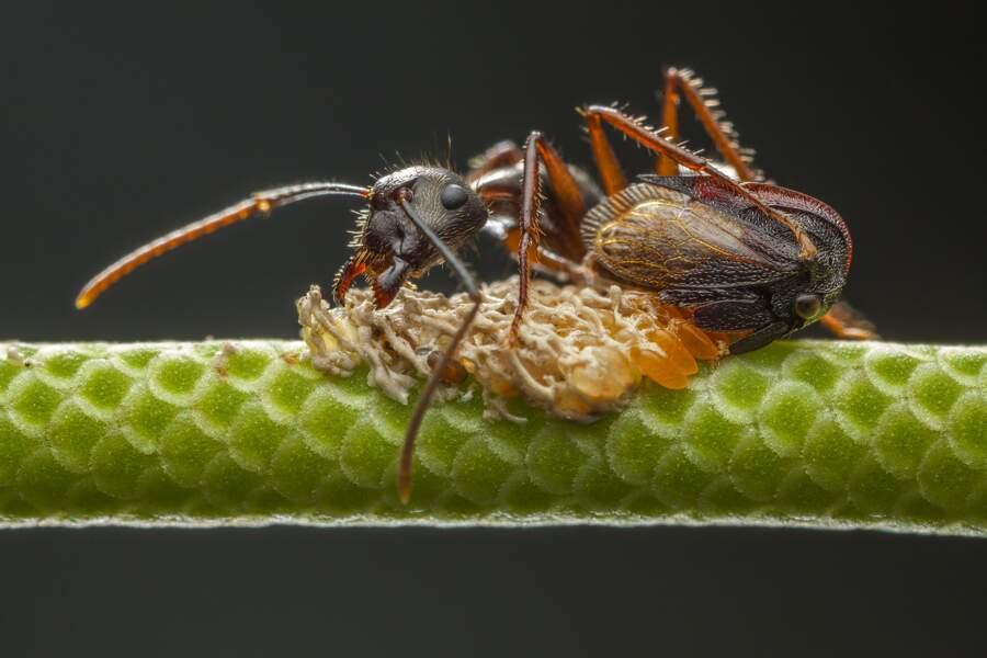 """Des fourmis solidaires - Javier Aznar González de Rueda (Espagne), finaliste dans la catégorie """"comportement des in"""