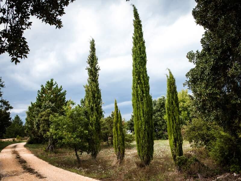 Un décor à la douceur toscane en plein Vaucluse, entre cyprès, oliviers et lentisques