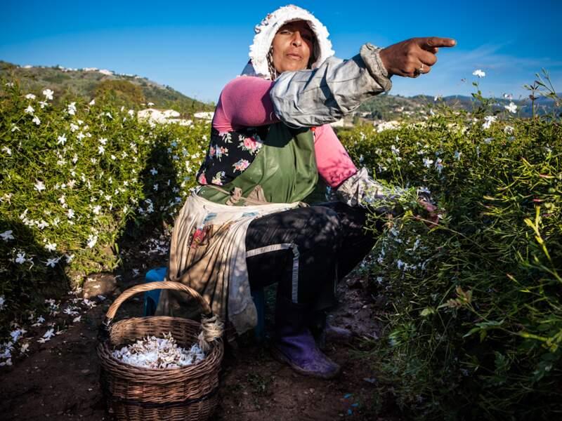 Les terroirs de Provence sont une corne d'abondance