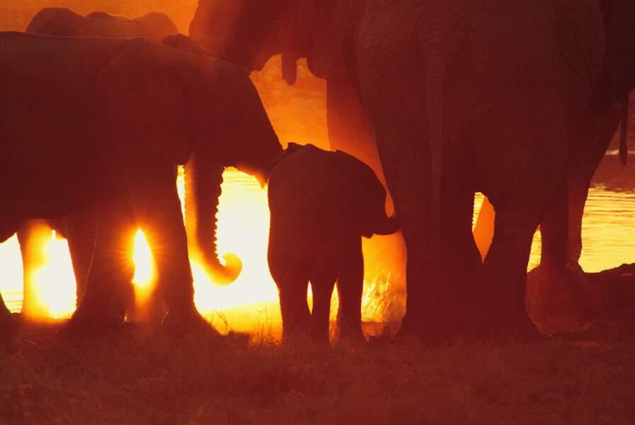 C'est beau, un safari la nuit