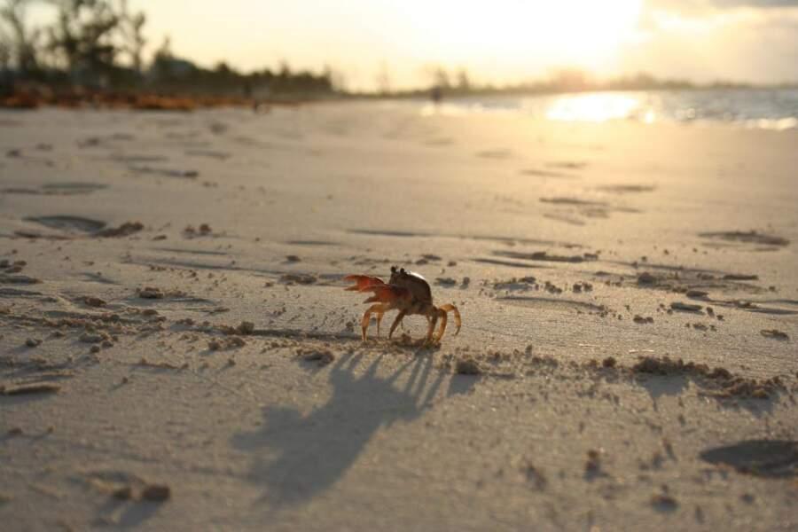 Photo prise par Bea Allegre aux Bahamas
