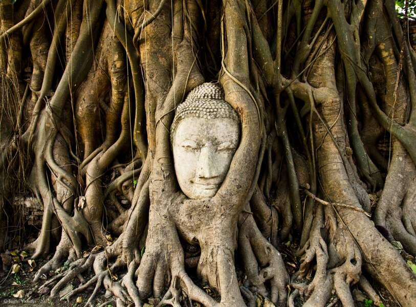 Le figuier des banians de Wat Mahathat, en Thaïlande