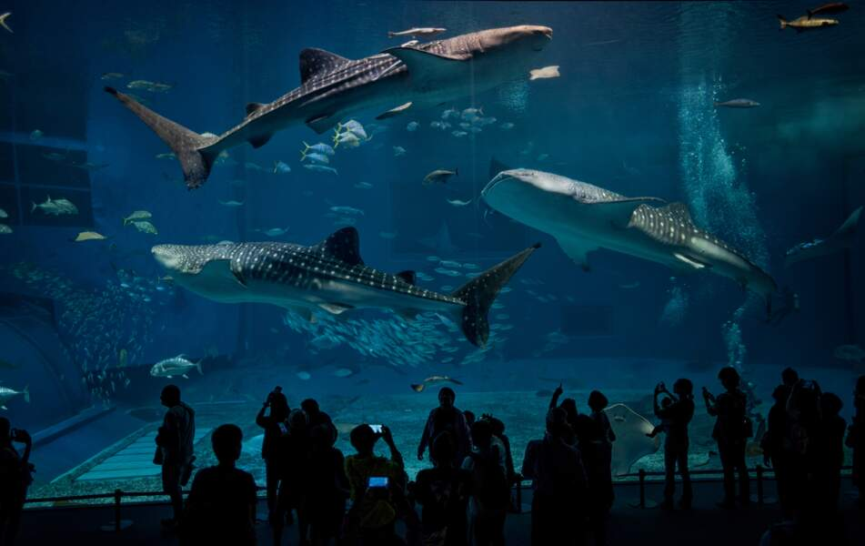 Show à l'aquarium d'Okinawa