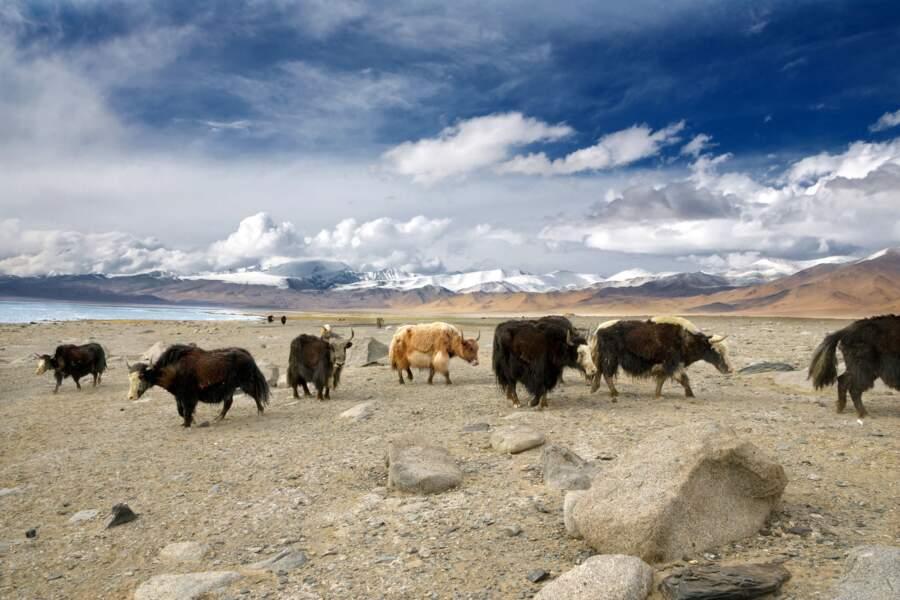 Tadjikistan, Haut-Badakhchan