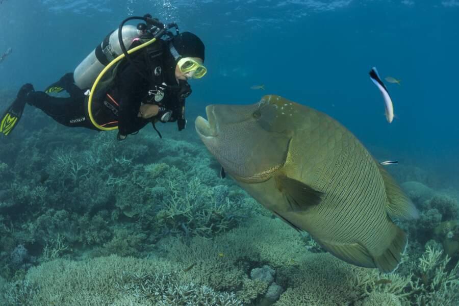 La Grande Barrière de corail, sanctuaire pour la biodiversité