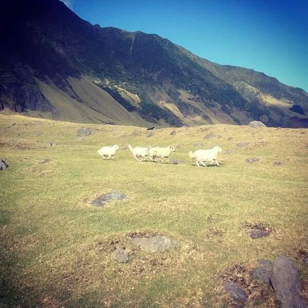 Le peuple de l'herbe : 600 têtes de moutons élevées et 400 à l'état sauvage.