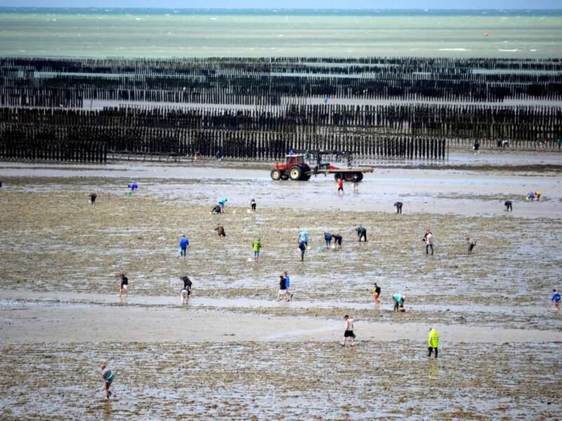 Pêche à la palourde sur les côtes de la Manche