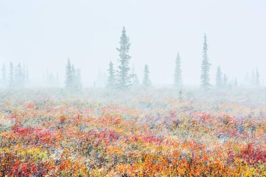 Tempête de neige sur la toundra / Alaska, Etats-Unis