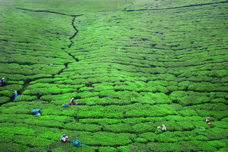 Tea time au Sri Lanka