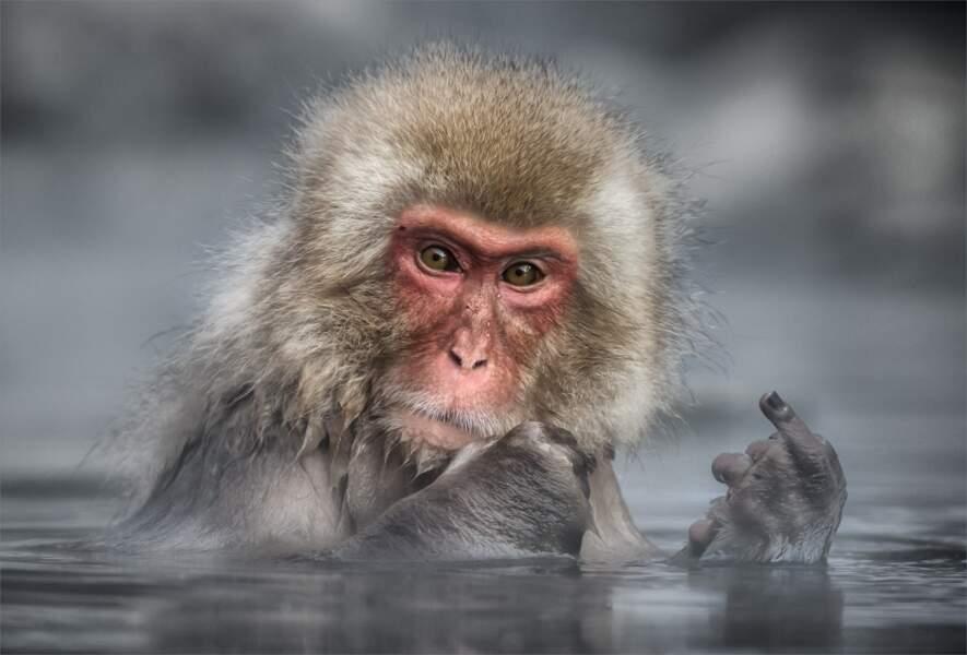 Are you talking to me ? (macaque japonais, parc aux singes de Jigokudani, préfecture de Nagano, Japon)