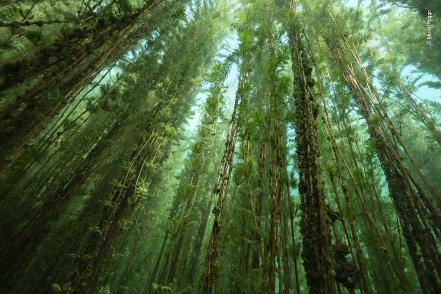 Forêt d'eau douce